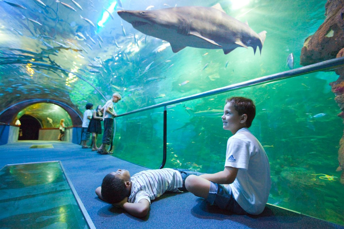 aquariumtunel