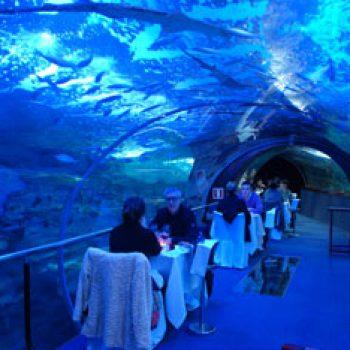 aquarium-cena