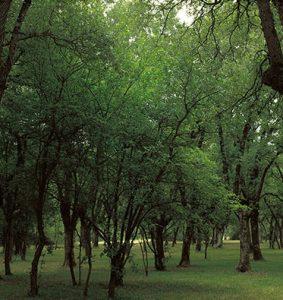 Bosque de Armentia